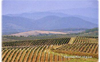Виноградники Закарпатья