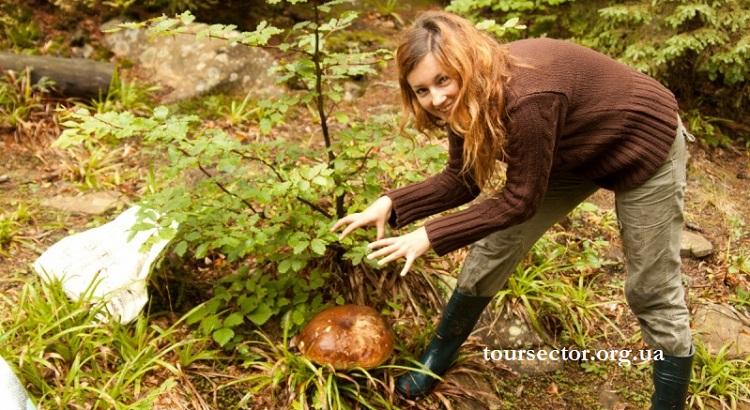 грибы и ягоды Карпат